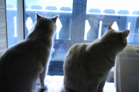 Anne Mondro's Cats
